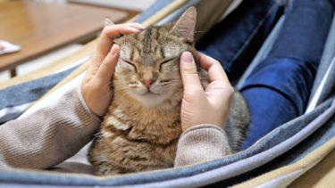 おうちでハンモック猫カフェしてみた!【ポムさんとしまちゃん / ねこべや】