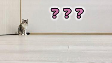 ある日突然、部屋が空っぽになってたときの猫の反応がこちらです…笑【もちまる日記】