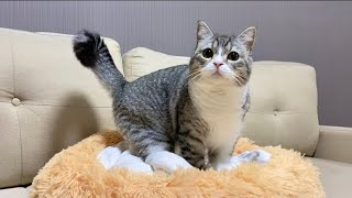 自分専用のふかふかベッドを手に入れてご満悦の猫がこちらです…笑【もちまる日記】