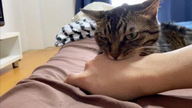 しつこい飼い主が大嫌いな凶暴猫【てん動画】