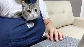 抱っこ紐にくるまれながら編集を見守る猫がこちらです…笑【もちまる日記】