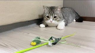 一番お気に入りのおもちゃが壊れてガチへこみしちゃった猫…【もちまる日記】