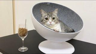 猫にセレブベッドを献上したら寝心地よすぎてこうなった笑【もちまる日記】