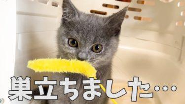 子猫が巣立ちました…【まんまる猫】つむチャンネル。
