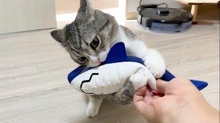 猫に新しい友達を連れてきたら3秒でこうなった…w【もちまる日記】