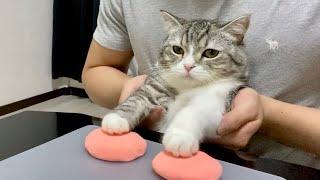 肉球の型をとられて不満げな猫がこちらです…笑【もちまる日記】