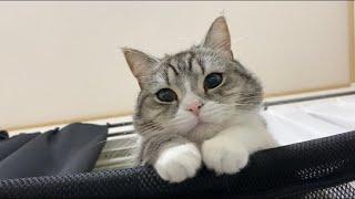 うっかり昼寝しすぎたら猫にこんな顔で見下ろされてました…【もちまる日記】