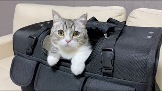 猫に最高級キャリーを貢いだら快適すぎてこうなった笑【もちまる日記】