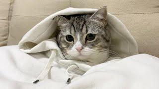 脱ぎ捨てたパーカーの中に猫が住んでいましたw【もちまる日記】