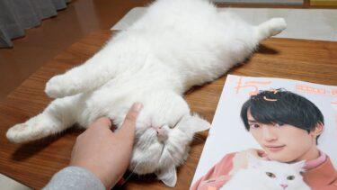 ちゃっかり雑誌に特集されるおもち猫!【ポムさんとしまちゃん / ねこべや】