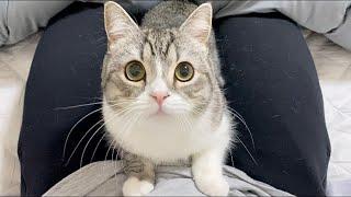 猫がお股に挟まって甘えてくるので困ってます。。【もちまる日記】