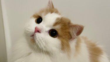 お風呂でいじけちゃう猫が可愛いw【猫のレモンちゃんねる】