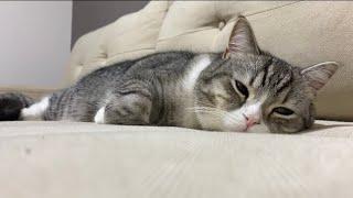 低気圧でやる気が出ない日の猫はこうなります。【もちまる日記】
