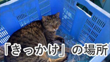 シェルターを持ちたいと思った、「きっかけ」の場所【hibineco/保護猫シェルター】