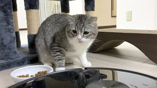 こぼしたご飯を掃除ロボに吸い取られた猫の反応が…w【もちまる日記】