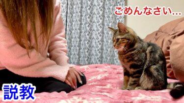 家出がバレて寝室に連行され本気で怒られてしまった子猫w【ちょりちゃみチャンネル】