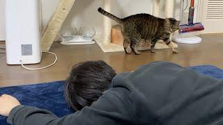 突然飼い主が倒れたときの凶暴猫の反応がこちら…【てん動画】