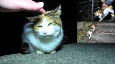 帰り際に頭を撫でてあげたらお礼に見送ってくれた心優しい三毛母猫😻【CuteWoo】