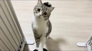 夜遅くに帰宅したら玄関で猫に問い詰められました…笑【もちまる日記】