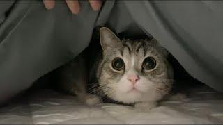 嵐が怖すぎて猫が布団から出てこなくなっちゃいました…汗【もちまる日記】