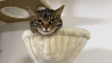 顔だけ出している凶暴猫を安易に触ってしまった結果…【てん動画】