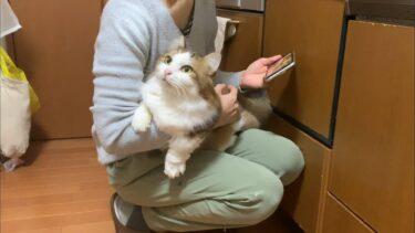 秀吉の猫あるあるを調査してみました【ひのき猫】