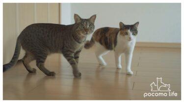 猫と一緒に引っ越しました。そしてチャンネル名が変わります!【ぽてとチャンネル】