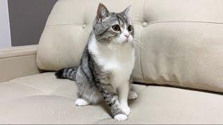 夜に地震が発生して飛び起きちゃった猫がこちらです…【もちまる日記】