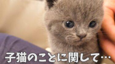 子猫のイクラは♀ではありませんでした…【まんまる猫】つむチャンネル。
