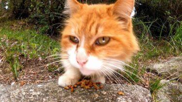 公園で地域猫活動されてる「猫大好きBIGMAMA」さんと猫の夕御飯にご一緒してきました。【感動猫動画】