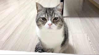 【悲報】ボディーソープを変えたら猫が一緒に寝てくれなくなりました。【もちまる日記】