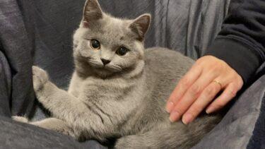 マロにも新たな疑惑が浮上しました…【まんまる猫】つむチャンネル。