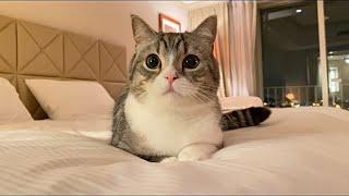 猫と一緒に高級ホテルで一泊したら幸せすぎました…笑【もちまる日記】