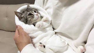 赤ちゃんみたいにお包みされてごきげんな猫がこちらです笑【もちまる日記】