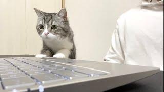 相手にされずに寂しくてズームに乱入しちゃった猫がこちらです笑【もちまる日記】