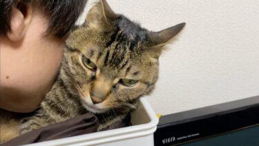凶暴猫に思いっきりキスをしてみた結果…【てん動画】