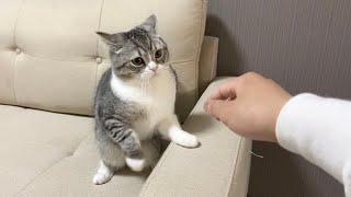 連絡なしに朝帰りしたら猫にガチギレされました…【もちまる日記】
