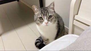 体調不良の飼い主が心配で枕元から離れない猫がこちらです…【もちまる日記】