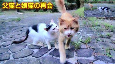 離れて暮らす白黒娘猫の元へ茶トラパパ猫が訪ねて来た😹【CuteWoo】