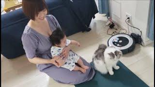 ズリバイの練習中なのにママに甘えまくる温厚猫もちとら【kokesukepapa】