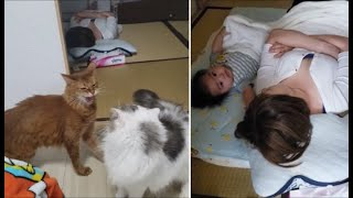 出入り禁止の和室が気になる猫達&昼寝する母子【kokesukepapa】