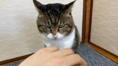 久しぶりに会った実家猫を触ろうとした結果…【てん動画】