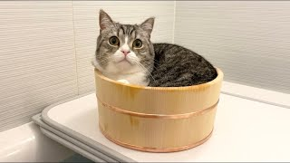 どうしても混浴したがる猫がついにこうなりました…w【もちまる日記】