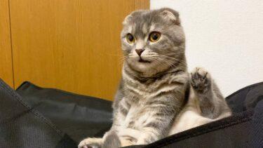 グルーミングで起こる問題についてお知らせします笑【まんまる猫】つむチャンネル。