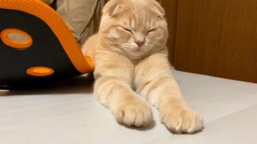 ムギがちょっと変になっちゃいました笑【まんまる猫】つむチャンネル。