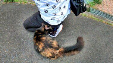 私を離そうとしないサビ猫😸【CuteWoo】