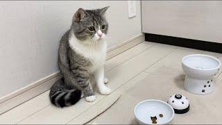 楽しみにしてたご飯が3粒しかなかったときの猫の反応がこちら…w【もちまる日記】