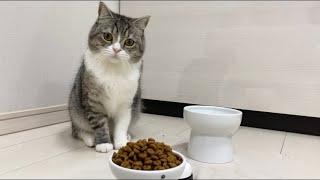とんでもない量のご飯が出できたときの猫の反応がこちらですw【もちまる日記】