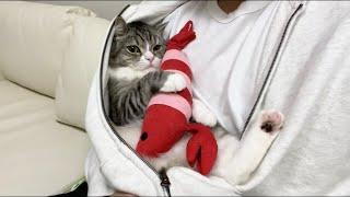 パーカーの中から出てくれない甘えんぼ猫がまじかわいすぎた…笑【もちまる日記】