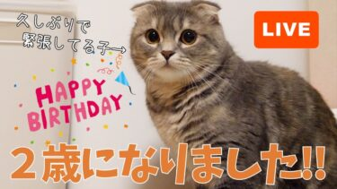 【祝】つむの誕生日ライブ!2020/09/17 21:15~【まんまる猫】つむチャンネル。